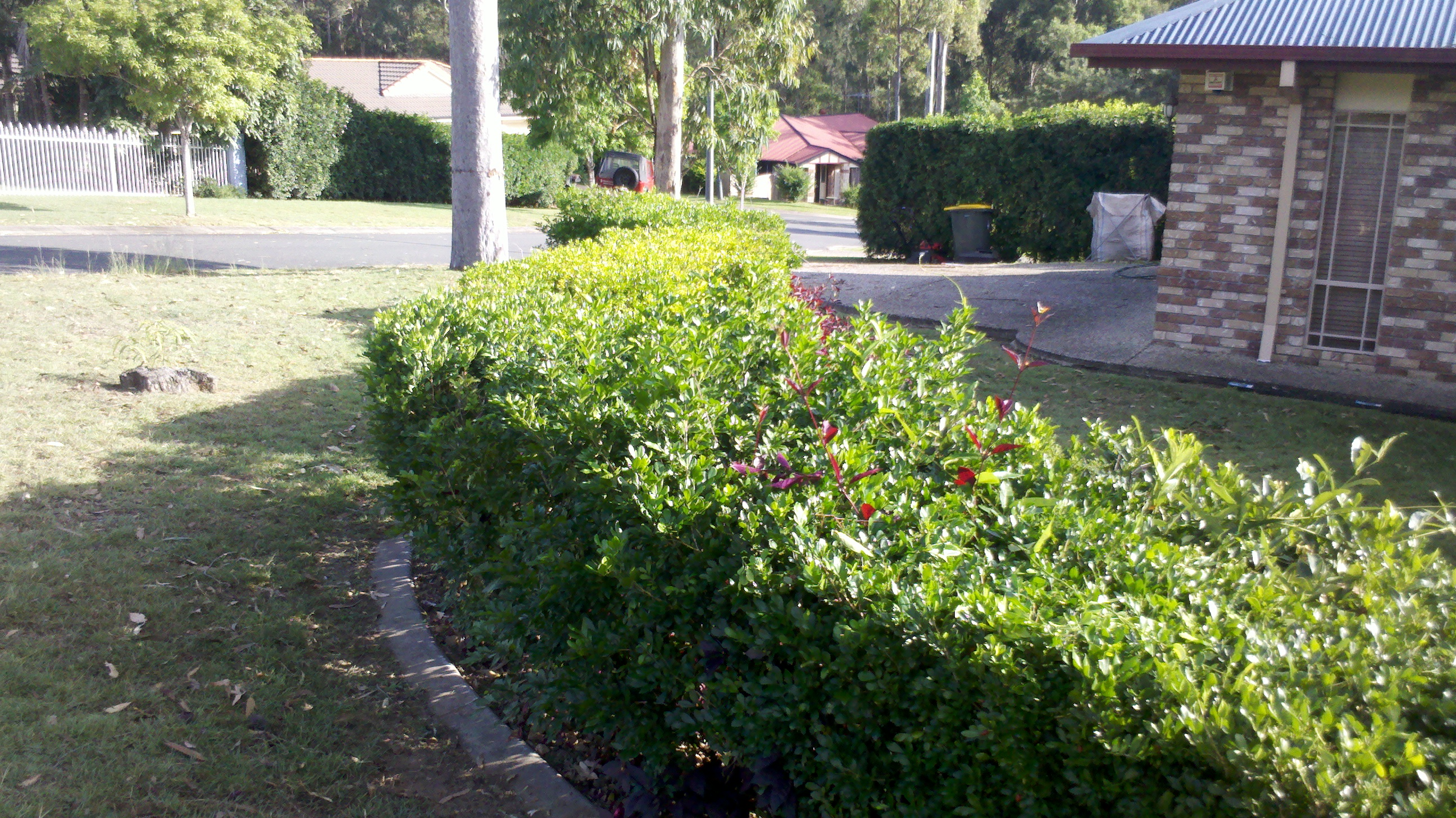 before Hedge #2