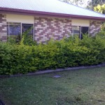 before hedge #1